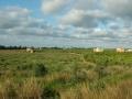 Plantagen bei Alzira