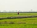 Reisfelder Jogger