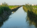 Reisfelder Kanal 3