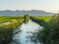 Reisfelder Kanal 4