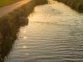 Reisfelder Kanal Sonnenuntergang