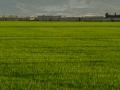 Reisfelder3