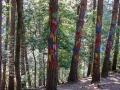 Bosque Pintado
