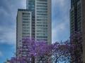 Torre Gavia