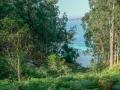 Wald auf den Cies Inseln