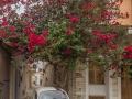 Chalki Auto und Blüte