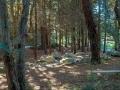 Golden Gate Park Aids Memorial Grove