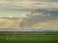 Reisfelder Sommer mit Waldbrand
