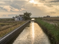 Reisfeldkanal