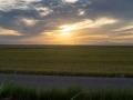 Sonnenuntergang über Reisfeldern